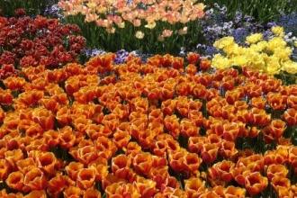 Botanischer Garten München Tulpen 5