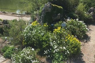 Botanischer Garten München Alpinum 2
