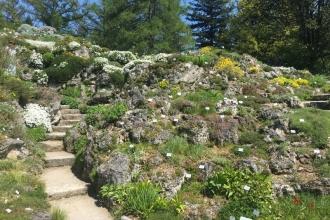 Botanischer Garten München Alpenkräuter