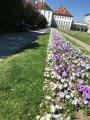 Blumen im Schloss München