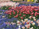 Botanischer Garten München Tulpen 1