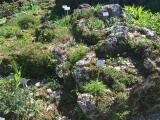 Botanischer Garten München Alpinum