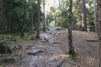 Wanderweg-im-Pfynwald