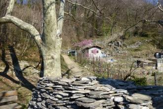 Monte-Carasso-Weg-4
