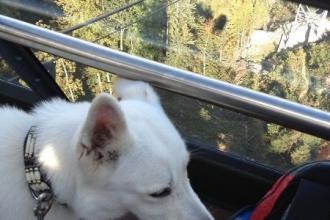 Stanserhorn mit Hundeli