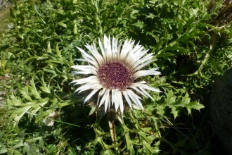 Blumen-6