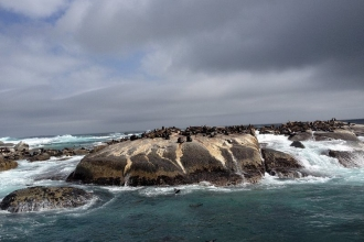 Duiker Island 3