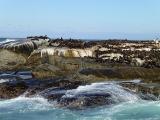Duiker Island 7