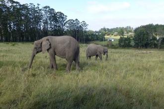 Knysna Elefanten Park  3
