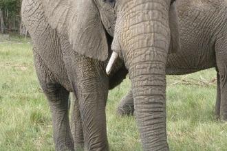Knysna Elephant Park  8