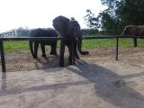 Knysna Elephant Park  4
