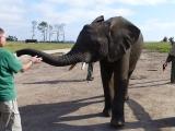Knysna Elefanten Park  5