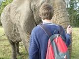 Knysna Elephant Park  6