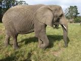 Knysna Elefanten Park  7