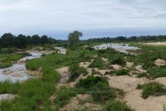 Krüger-Nationalpark-Fluss