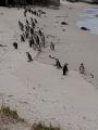 Simons Town Pinguine 7