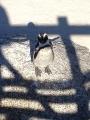 Simons Town Pinguine 8