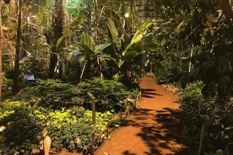 Tropenpflanzen im Tropenhaus