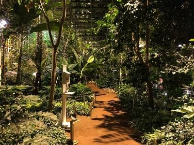 Pflanzen im Topenhaus Wolhuse