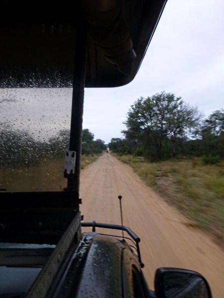 Krüger-Safari-Geländewagen